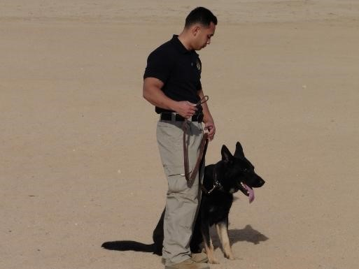 Dog and his handler