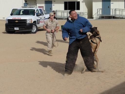 Marine Corps Dogs trained to sniff out drugs and take down bad guys display
