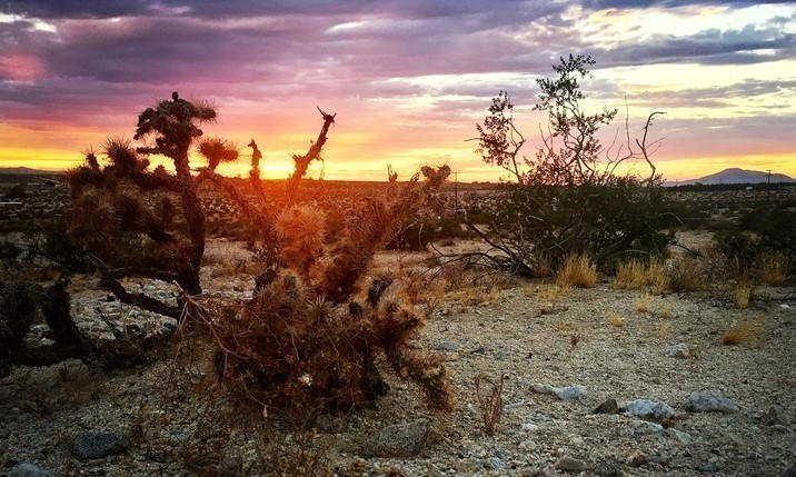 Sunset in Twentynine Palms- Photo taken by Mia Perleberg